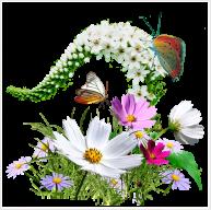Aranjamente florale Cluj